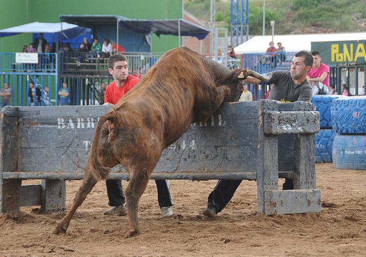 La Pascua Taurina de Onda acoge todos los años al ganado de corro más relevante de nuestro país. Fotos: José Manuel Marzá.